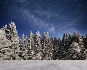magical winter snow covered tree. Winter landscape. Vibrant night sky with stars and nebula and galaxy. Deep sky astrophoto
