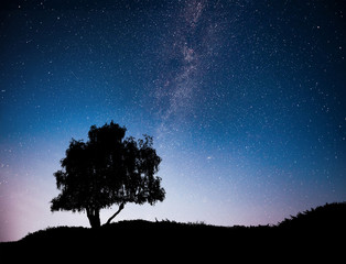 Landscape with night starry sky and silhouette of tree on the hill. Milky way with lonely tree, falling stars.