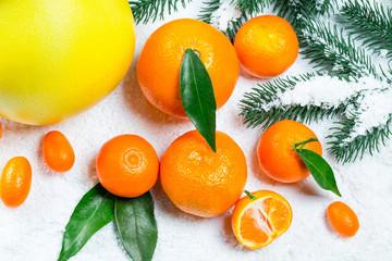Fresh mandarins, oranges, pomelo, kumquat, kinkan with leaves on white snow. Ripe citrus fruits background. Symbol of the New Year and Christmas