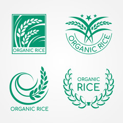 Green Organic Rice logo with paddy rice and leaf vector design