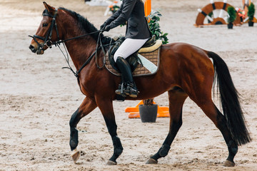 Foto op Aluminium Paardrijden Horse jumping contest. The Equestrian Sports. Horseman sitting in saddle