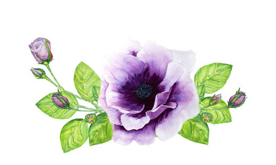 bouquet of roses and anemone watercolor illustration