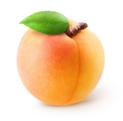 Whole single apricot fruit with leaf isolated on white background with clipping path