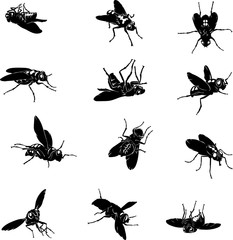 fly, insect, black, vector, silhouette