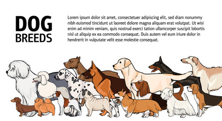 Horizontal banner with dogs of different breeds and place for text on white background. Various beautiful purebred pet animals with long and short haired coats, side view. Vector illustration.