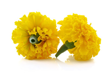 Marigold flower beautiful blossom background
