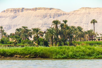 Palms and dwelling houses on the banks of the Nile