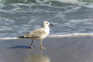 seagull near the water on the seashore