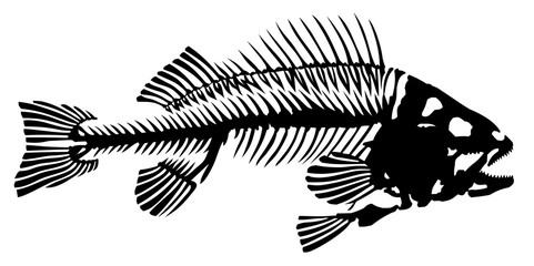 Skeleton of fish.