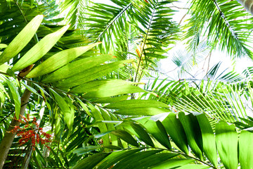 close up of a green tropical rainforest canopy, image had a graphical look about it, with a white background