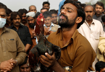 The owner of a rooster sprays water on the head of his bird to help it cool down after a cock fight in Fateh Jang