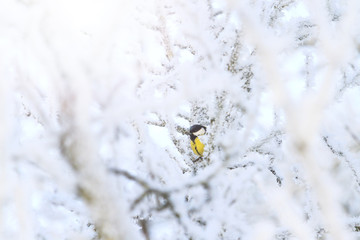 colored bird among white snowy branches with sunny hotspot