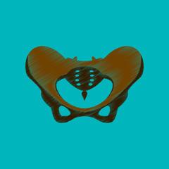 flat shading style icon pelvic bones