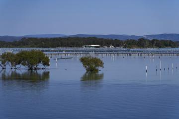 Austern-Zucht-Anlage in seichter Meeres-Bucht