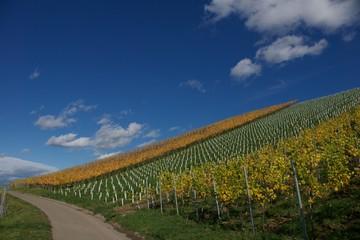 Wandern, Schwarzwald, Weinberg, Urlaub, Reisen