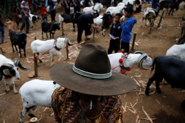 A villager stands near rams at Cikawao village in Majalaya, West Java province