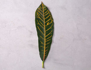 Green leaf with yellow veins on grey background