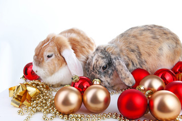 Christmas animals. Cut lop eared rabbit pet friends on isolated white studio background. Rabbits with red and gold christmas ornaments. Christmas pets celebrate holiday together. Cute.