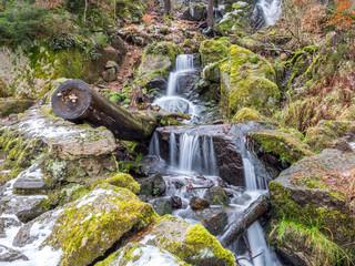 mit Moos bedeckter Wald im Winter