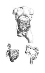 Anatomical Body Exhibit 8