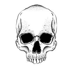 Portrait of a skull. Can be used for printing on T-shirts, flyers, etc. Vector illustration