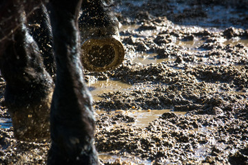 Close Up Of Horse Hooves During Gallop