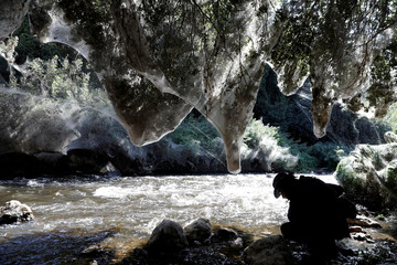 Giant spider webs, spun by long-jawed spiders (Tetragnatha), cover sections of the vegetation along the Soreq creek bank, near Jerusalem