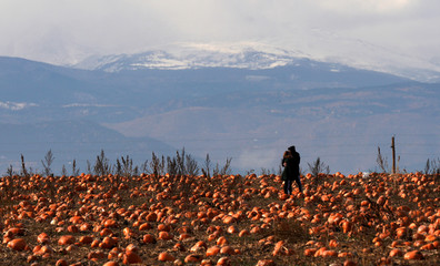 Teresa Freeman and Nathan Harris share a kiss as they hunt for last minute Halloween pumpkins on Halloween Day with the Continental Divide in the background in Broomfield