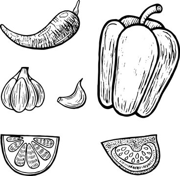 Mexican vegetables set. Graphic coloring page for adults. Vector illustration