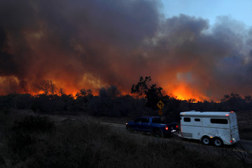 A horse is evacuated from the Lilac Fire, a fast moving wild fire in Bonsall, California
