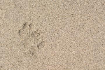 The dog footprint on the beach