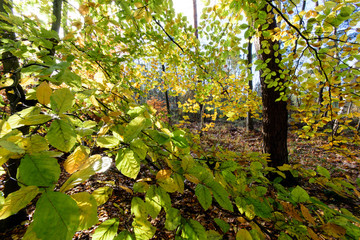 Beauty of autumn / wonderful fall colors in the forest :)