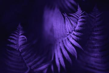 Beautiful fern leaves, macro