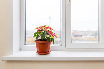 Flower in a pot on the window