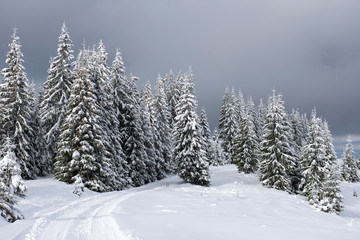 Winter panorama with snow covered trees
