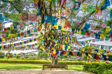 sacred holy big  tree buddhist in nepal. lumbini