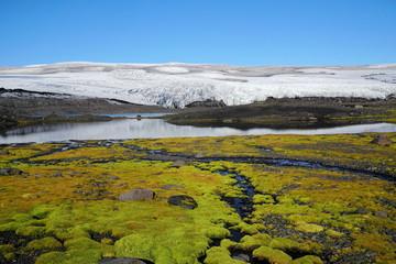 Gletscher und Moos auf Island, Skandinavien
