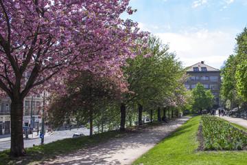 wiosenne drzewa w parku z kwiatami