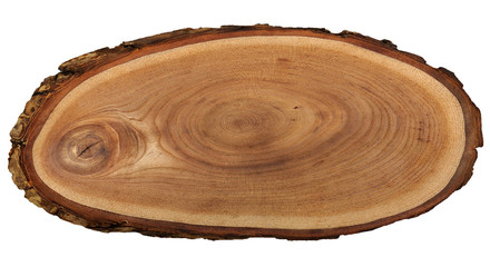 A close up of the cut of a ash tree. ( Fraxinus mandshurica ) texture of ash tree isolated on white.