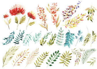 Watercolor floral set. Colorful purple floral collection with leaves and flowers, drawing watercolor. Colorful floral collection with flowers. Set of floral elements for your compositions.