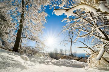 Heitere Winterlandschaft mit Sonne, Schnee auf Bäumen und blauem Himmel