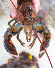 Lobster in hand in the Chinese market of Hainan Island