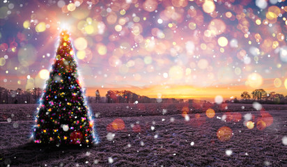 Christmas Tree Frozen Nature Sunset Bokeh Snow