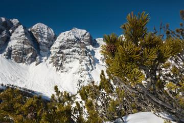 Tannenzapfen und Bergpanorama