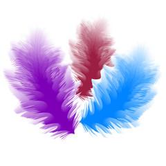Vector illustration of Three Feathers