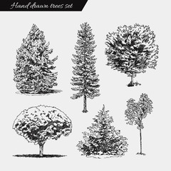 Set of hand drawn trees. Sketch Drawing illustration vector