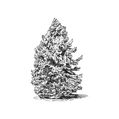 Hand drawn trees. Sketch Drawing illustration vector