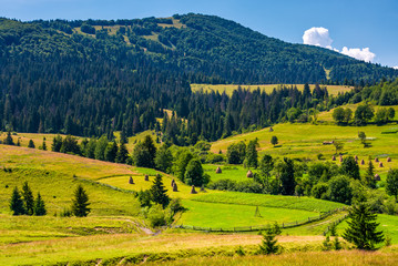 rural fields and forested hills of Carpathians. lovely scenery in summer mountains