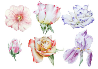 Set with bright flowers.  Rose. Iris. Eustoma. Mallow. Watercolor illustration. Hand drawn.