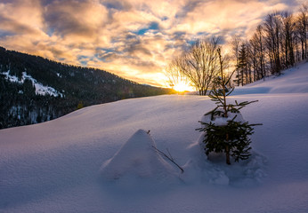 snowy slope on forested hill at sunrise. beautiful mountainous scenery with gorgeous sky in winter